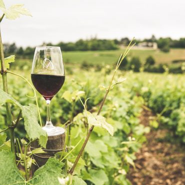 Homegrown Black Walnut Winery Encourages a Relaxing, Engaging Wine-Tasting Experience